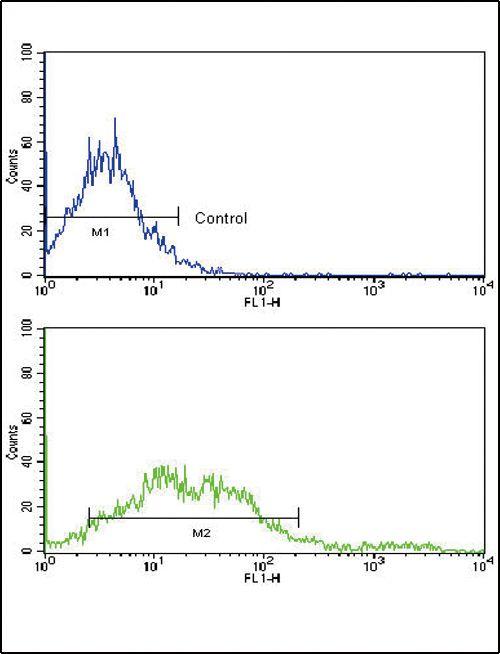 EphA2 Antibody in Flow Cytometry (Flow)