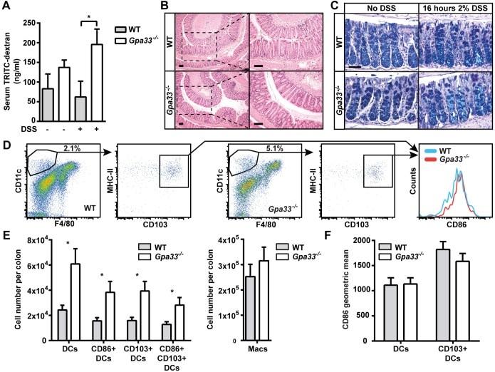 CD326 (EpCAM) Antibody