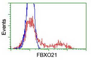 FBXO21 Antibody in Flow Cytometry (Flow)