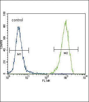 FLT3 Antibody in Flow Cytometry (Flow)