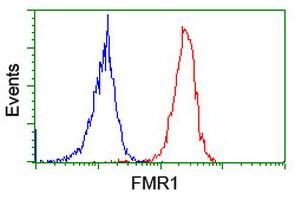 FMR1 Antibody in Flow Cytometry (Flow)