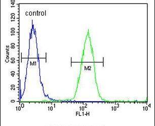 FOXC2 Antibody in Flow Cytometry (Flow)
