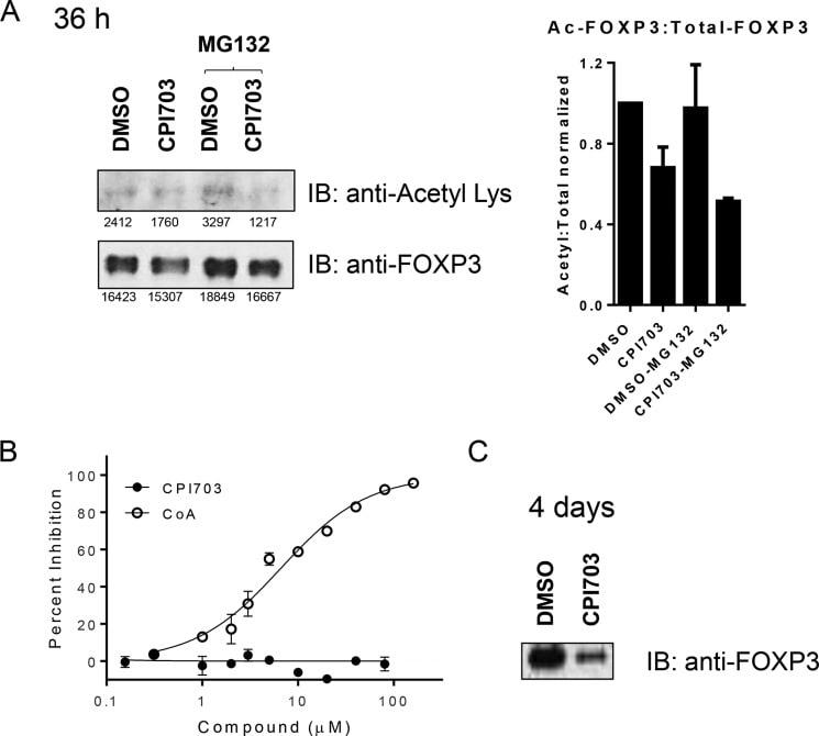 FOXP3 Antibody