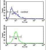 FUT1 Antibody in Flow Cytometry (Flow)