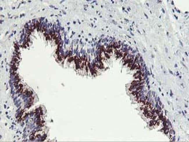 FXN Antibody in Immunohistochemistry (Paraffin) (IHC (P))