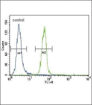 Fyn Antibody in Flow Cytometry (Flow)