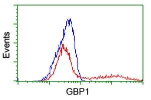 GBP1 Antibody in Flow Cytometry (Flow)