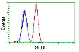 GLUL Antibody in Flow Cytometry (Flow)
