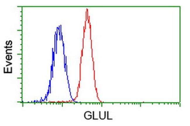 GLUL Antibody in Flow Cytometry (Flow)