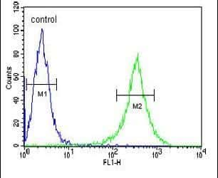 GNE Antibody in Flow Cytometry (Flow)