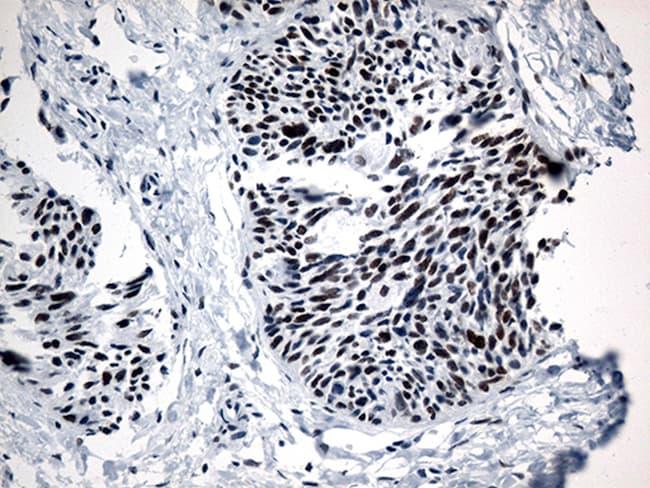GTF3C4 Antibody in Immunohistochemistry (Paraffin) (IHC (P))
