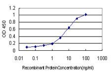 BMPR1B Antibody in ELISA (ELISA)