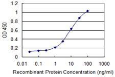 CAPN3 Antibody in ELISA (ELISA)