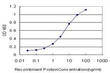 CDK4 Antibody in ELISA (ELISA)