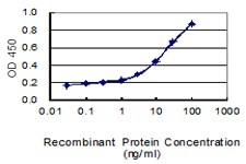 CLCN2 Antibody in ELISA (ELISA)