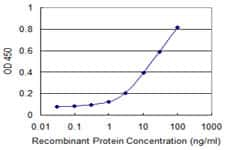 CLTC Antibody in ELISA (ELISA)