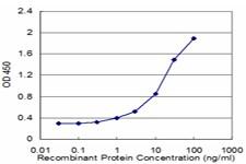 CLDN4 Antibody in ELISA (ELISA)