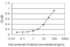 DUSP5 Antibody in ELISA (ELISA)