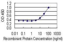 GLO1 Antibody in ELISA (ELISA)