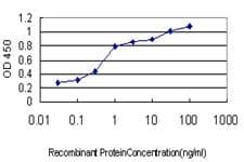 HFE Antibody in ELISA (ELISA)