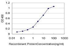 HIC1 Antibody in ELISA (ELISA)