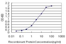 ING1 Antibody in ELISA (ELISA)