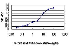 LRP5 Antibody in ELISA (ELISA)