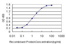 USF1 Antibody in ELISA (ELISA)