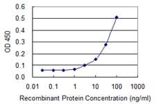 VCP Antibody in ELISA (ELISA)