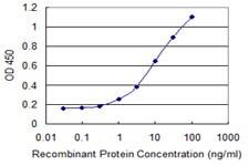 NAE1 Antibody in ELISA (ELISA)