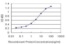 ATG5 Antibody in ELISA (ELISA)