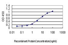 HTRA2 Antibody in ELISA (ELISA)