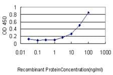 GSDMD Antibody in ELISA (ELISA)