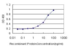 HIPK1 Antibody in ELISA (ELISA)