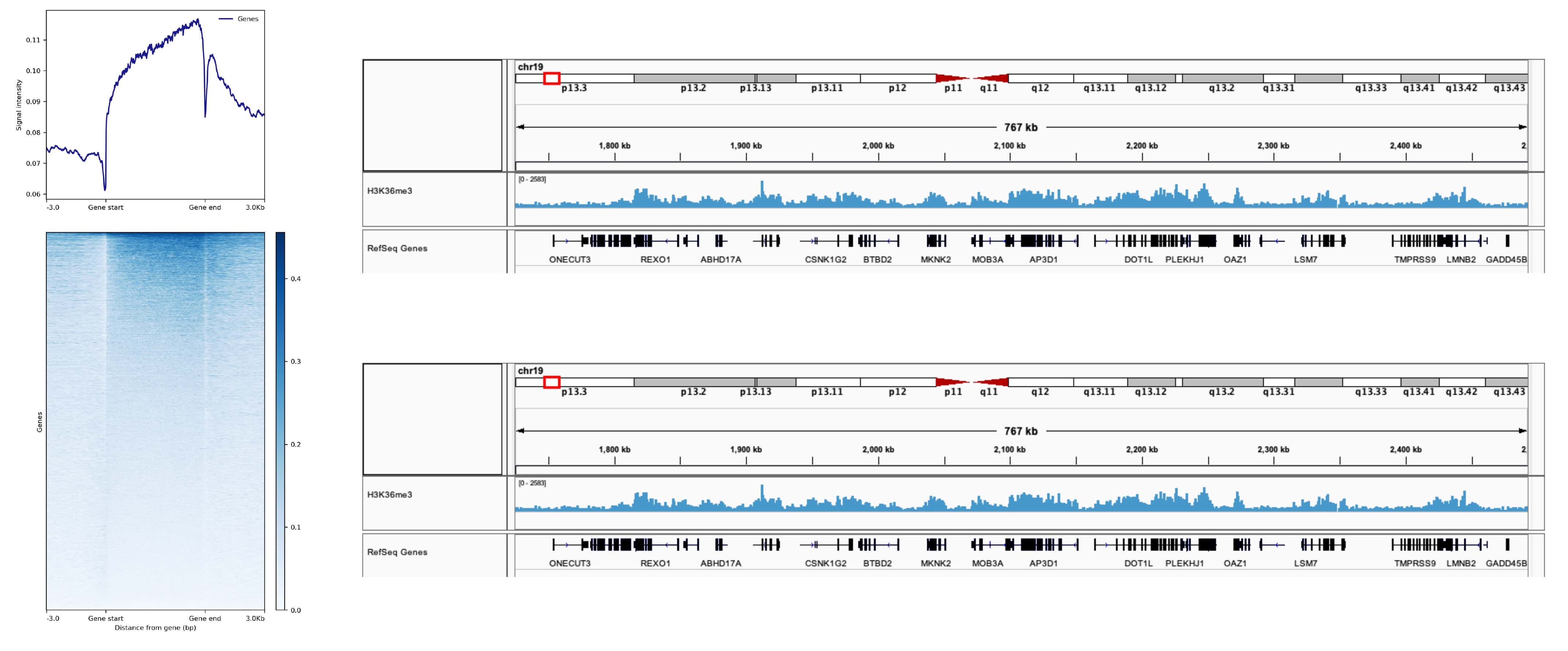 H3K36me3 Antibody in ChIP-sequencing (ChIP-seq)