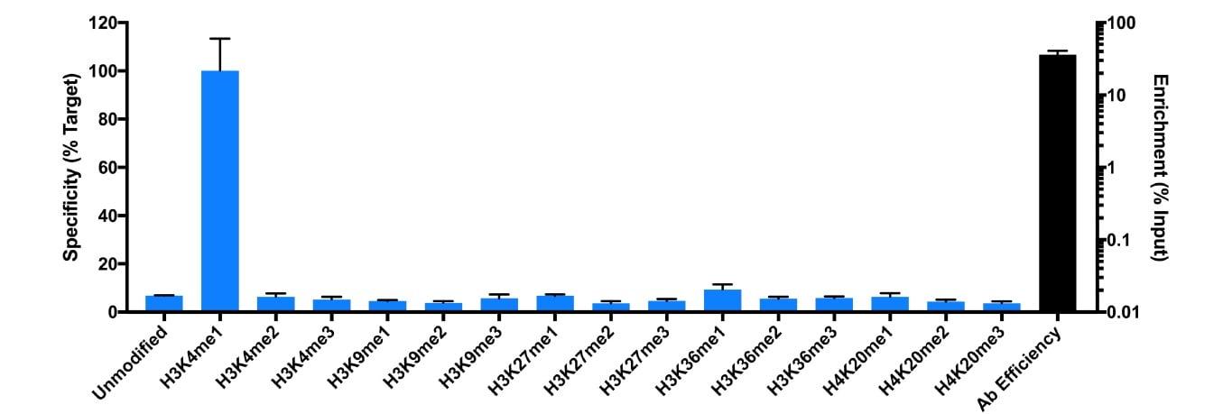 H3K4me1 Antibody in SNAP-ChIP