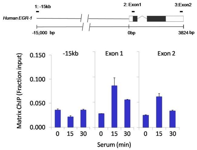 HDAC3 Antibody in ChIP assay (ChIP)