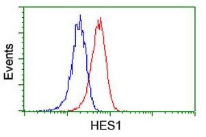 HES1 Antibody in Flow Cytometry (Flow)
