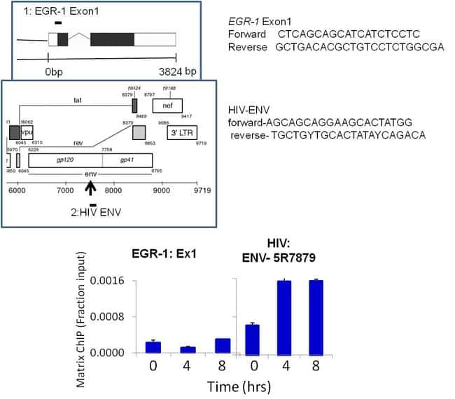 HIV1 Tat Antibody in ChIP assay (ChIP)