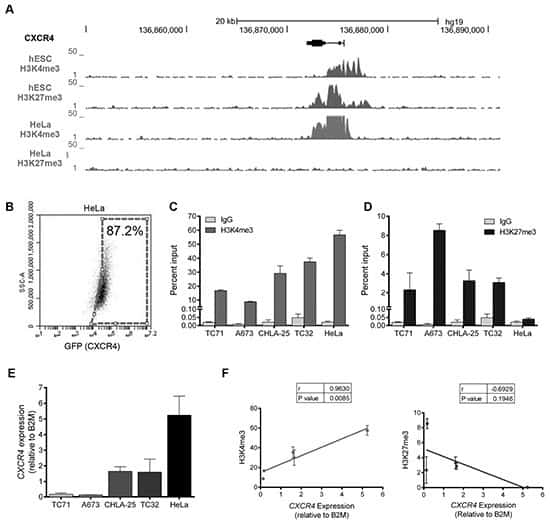 Tri-Methyl-Histone H3 (Lys4) Antibody