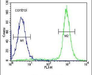 IBTK Antibody in Flow Cytometry (Flow)