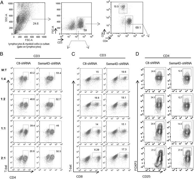 CD25 Antibody