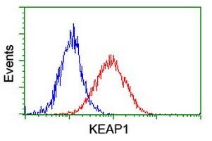 KEAP1 Antibody in Flow Cytometry (Flow)