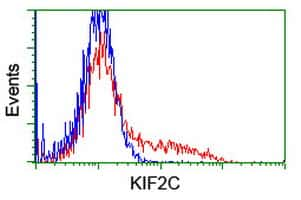 KIF2C Antibody in Flow Cytometry (Flow)