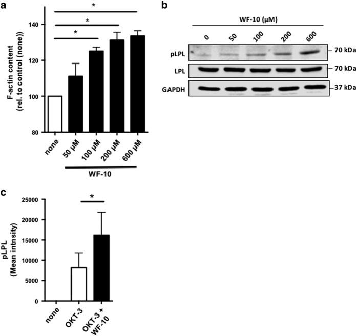 L-Plastin Antibody