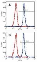 LAT Antibody in Flow Cytometry (Flow)
