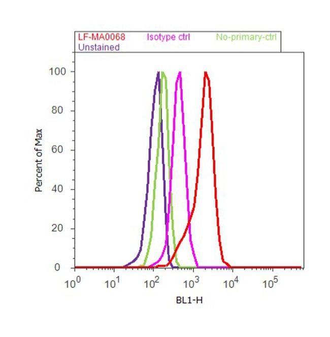 Primary Antibody Incubation At Room Temperature
