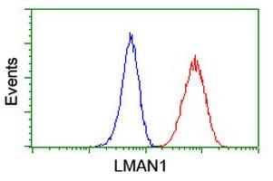 LMAN1 Antibody in Flow Cytometry (Flow)