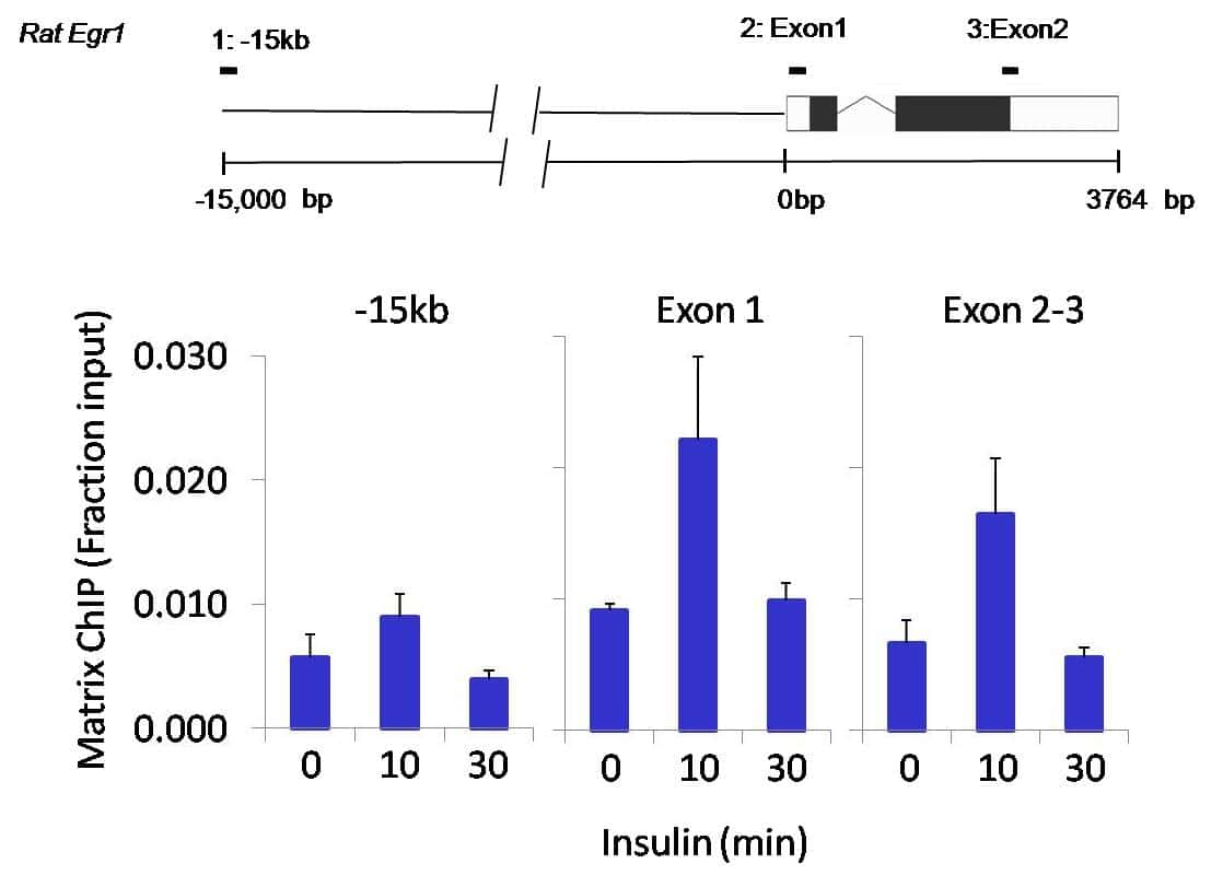 SOX2 Antibody in Cell treatment