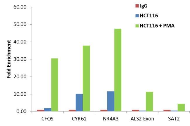 Phospho-CREB/ATF1 (Ser133, Ser63) Antibody in Relative expression